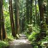 初夏の長野旅行:行きとは全く違う印象だった帰りの杉並木