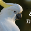幸せな空間ってありますか? 私は鳥カフェ