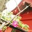 「精霊のお茶会 ~初詣・鎌倉八幡宮」ご案内 ※新日程