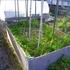アスパラの収穫が安定してきたところで更なる増産計画を!