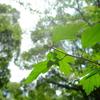 緑たちが まぶしそうに太陽の光を浴びています