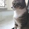 猫のいる生活(=^・^=)