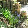 売ってしまった 夫の株券と、私の小さな庭