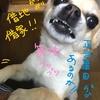 【宅建】【2018年8月③】フォーサイトから法改正の本届いた!ピース!