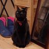 今日の黒猫モモ&黒白猫ナナ