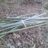4反の田んぼを天日干しするために、竹を貰ってきました!