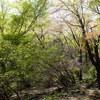 高尾山の混雑回避してGWは陣馬山で新緑ハイキング