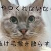 猫アレルギーだけど猫が飼いたいので猫を飼う