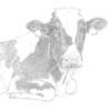 卒業生の作品(牛のイラスト)を紹介します