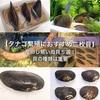 【タナゴ繁殖におすすめ二枚貝】産卵し易い母貝5選!貝の種類は重要
