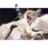 猫大笑いとCIAOスティック