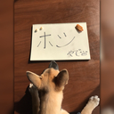 保護犬ホシの純情な感情