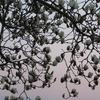 農園日誌ー春を告げる花