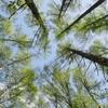 芽吹きの森を歩く