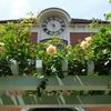 取材余話:兵庫:神戸布引ハーブ園取材は薔薇とミツバチとマダム・チューリップ