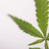 【メモ】大麻・アヘンの歴史