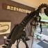 泊まれる恐竜博物館!?島根の奥出雲多根自然博物館へ。宿泊者はナイトミュージアムも。