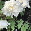 早春の鎌倉 花とお茶で 自律神経を整える