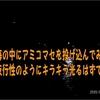 冬季は夜明け前に大アジがよく釣れるのは 三重県波切港