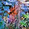 夢の島熱帯植物館の大温室を歩く|東京都・新木場にて