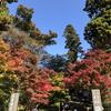 【鎌倉いいね】11月16日現在の鎌倉紅葉情報。