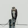 α9+SEL14TC+SEL600f40gmで猛禽類パラダイス