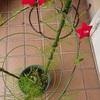 はじめまして、の赤い花  * またね、 の紫の花