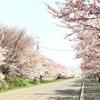 桜満開!GWは松前町&函館公園でお花見〜