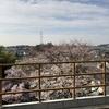 桜情報と玄関ポーチ