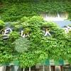 【カレー豆】蔦の絡まる弥彦成沢商店の建物