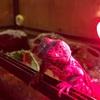 レオパゲルにテンションアゲアゲのセガール