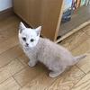 【新婚で猫を飼う】一緒に暮らしてみて分かった猫の魅力!