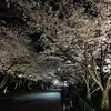 弁天さんの夜桜ライトアップ2018 行ってきました。 辯天宗(べんてんしゅう)の事も簡単に調べました。