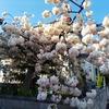えぃじーちゃんのぶらり旅ブログ~コロナで足止め2020年5月中旬 北海道石狩市編 その1