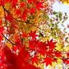 紅葉・食欲の秋、色んな秋が好きです。