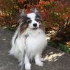 犬の体内時計とお散歩