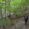 小満のヌル谷の遊山 森に入る