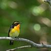 河川敷の春の渡りの鳥たち