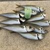 アジのカゴ釣り・サビキ釣り カゴとマキエを考察する