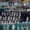 (海外反応) 中国「日本の原発汚染水放流は周辺国と十分協議すべき」。