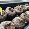 植物の生長記録①