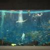 「鴨川シーワールド -千葉県-」 見どころ満載!水族館内を散歩。遊びつくそう、素敵空間に癒されます💛