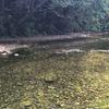 源河川(げんかがわ)「沖縄 名護の川」ポイント1