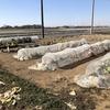 そろそろ秋冬野菜エリアを整理するとき