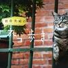 「岩合光昭の世界ネコ歩き写真展」に行きました。