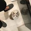 猫トイレ事情