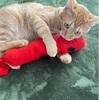 赤いセーターのおもちゃで遊んでくれました!