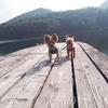 木崎湖☆わんことぶらり散歩旅