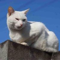 猫のアンテナ