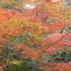いつの間にか、紅葉の季節2014